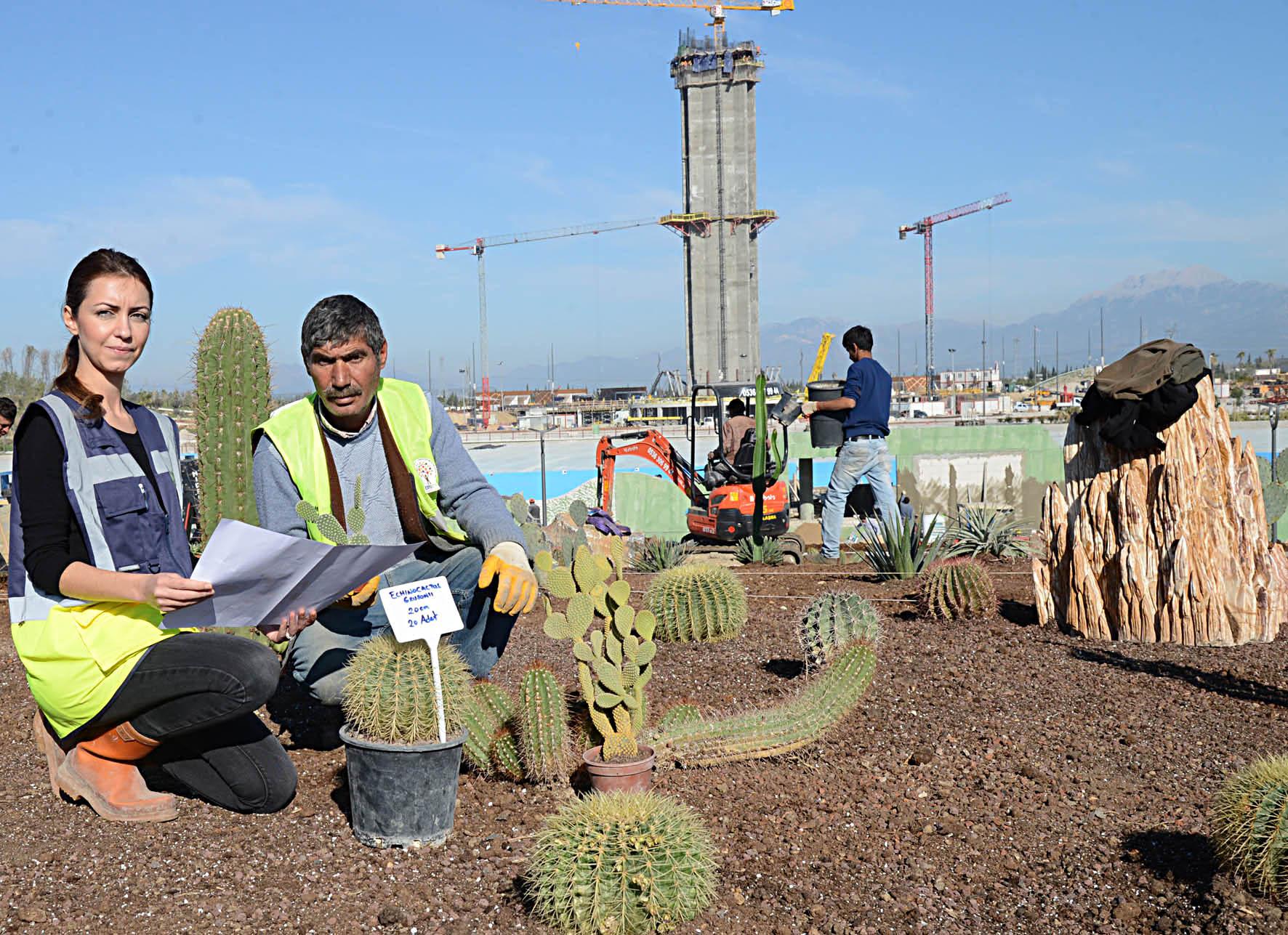 EXPO sergi alanına 52 türde 'Kaktüs ve sukkulent' dikiliyor