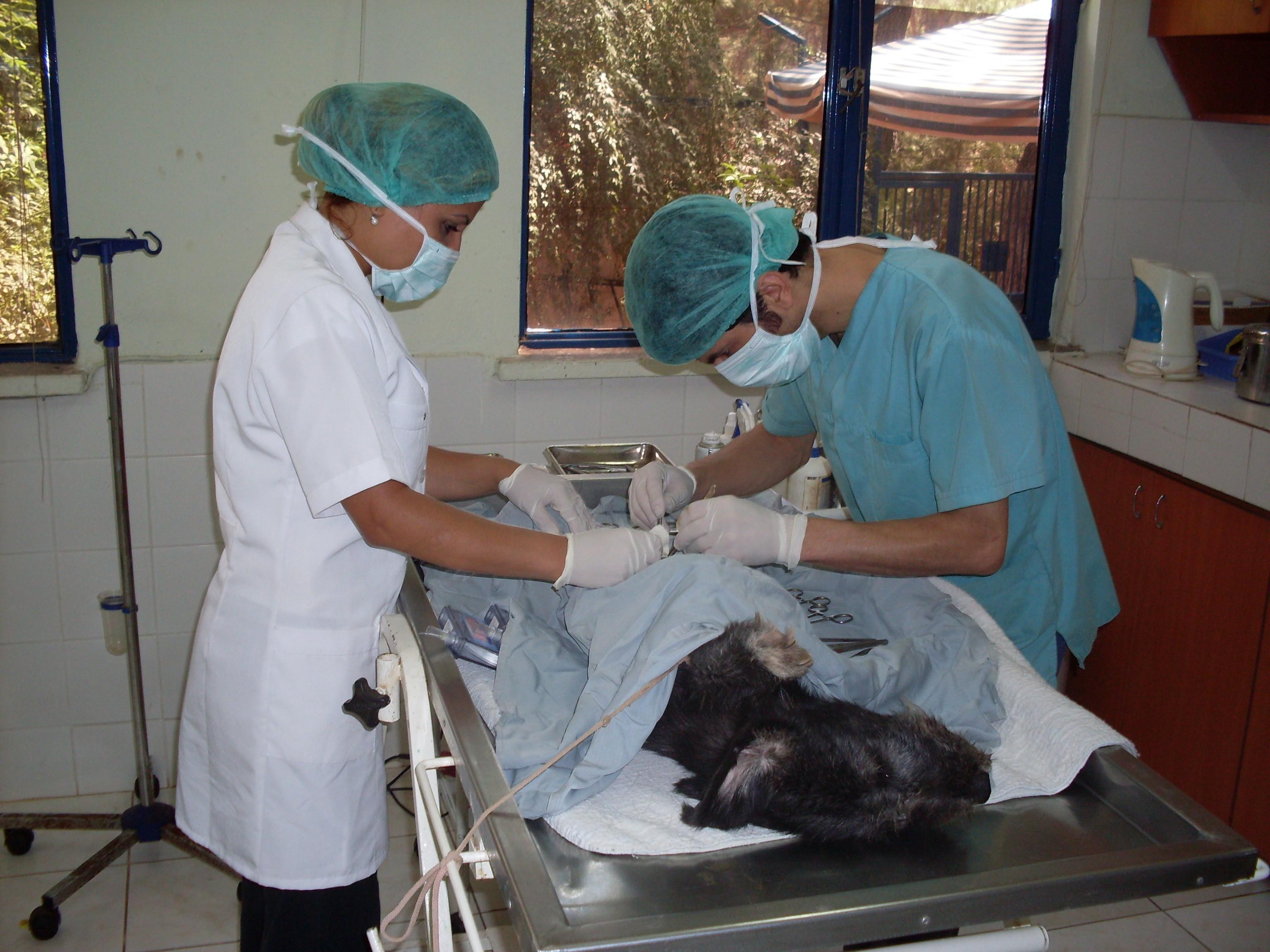 4 bin 817 sokak hayvanı tedavi edildi