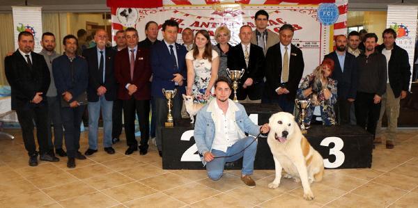 Köpekler Kemerde  birincilik için yarıştı