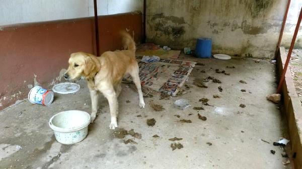 Kötü Şartlardaki Köpeğin Fotoğrafını Çekerken Tartaklandı