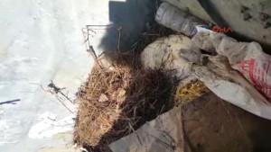 Antalya Kedi Köyündeki Ölümler Hayvanseverleri Karşı Karşıya Getirdi