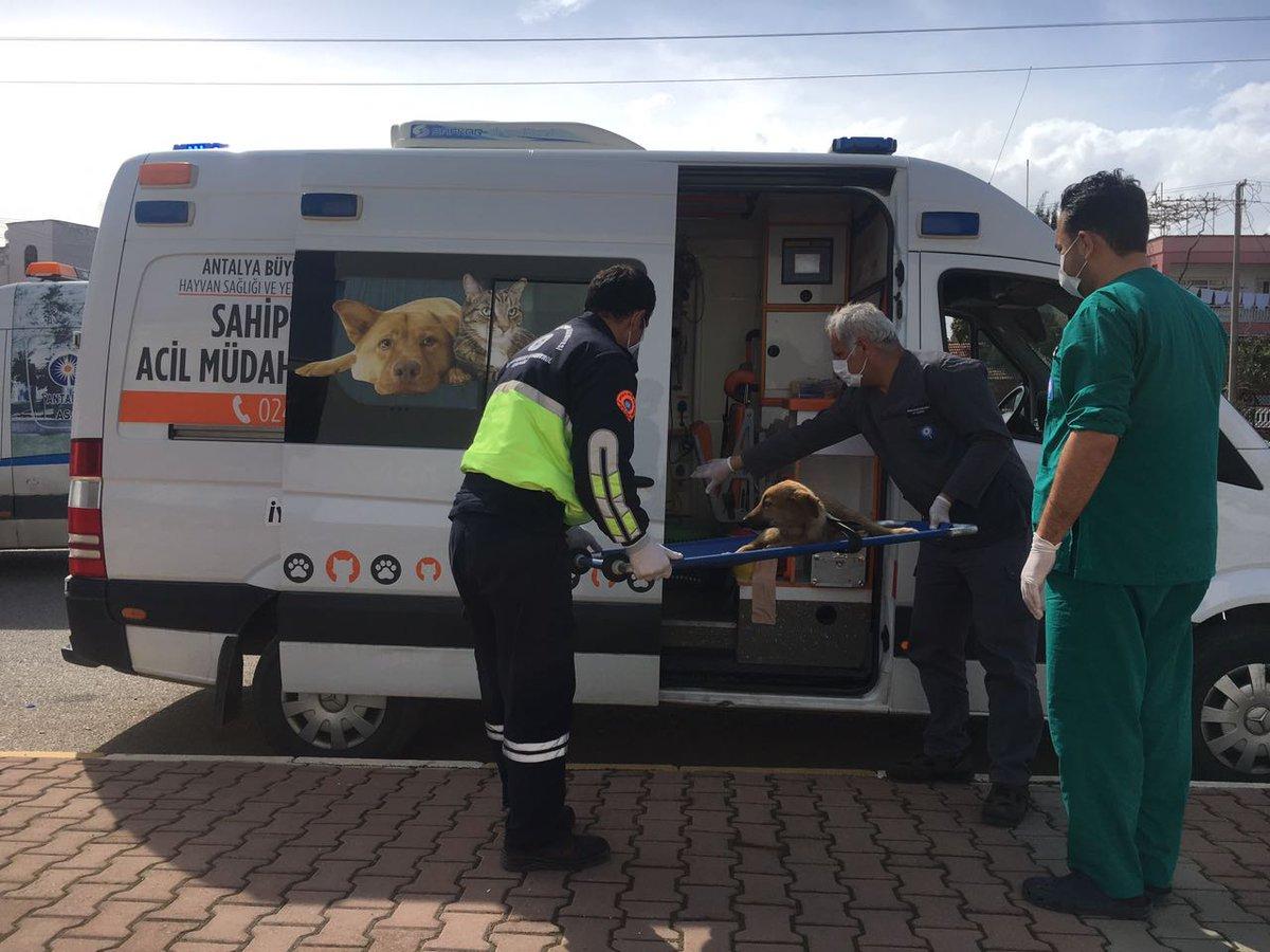 Büyükşehir'den yaralı hayvanlara ambulansla müdahale