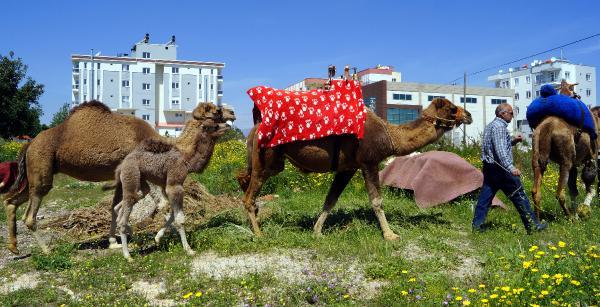 Anadolu'da 1500 deve kaldı