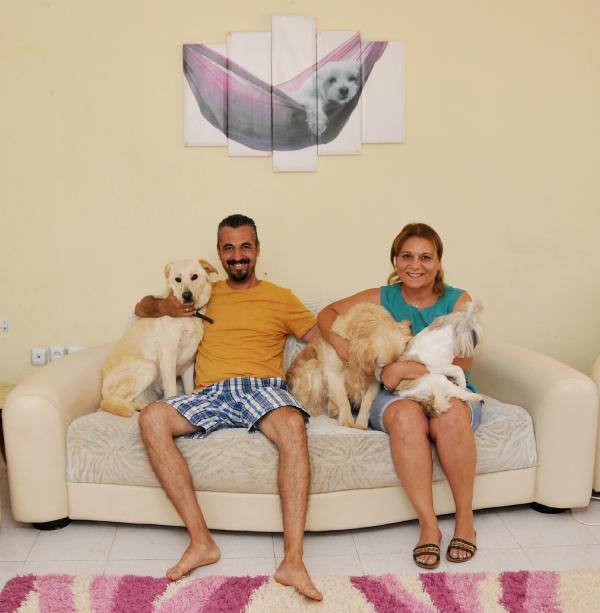 Köpeklere özel pansiyon