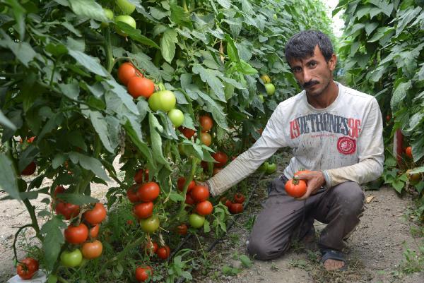 Ziraat Odası'ndan domates tepkisi