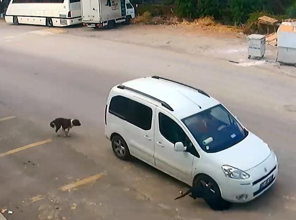 Köpeği ezen sürücüye 1097 lira ceza