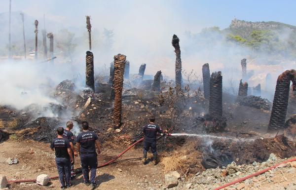 Kemer'de Yangında palmiyeler kül oldu