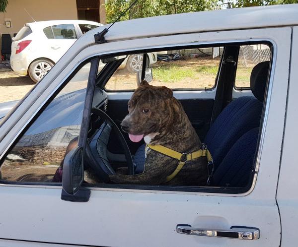 Atına saldıran köpeği otomobili ile ezdi
