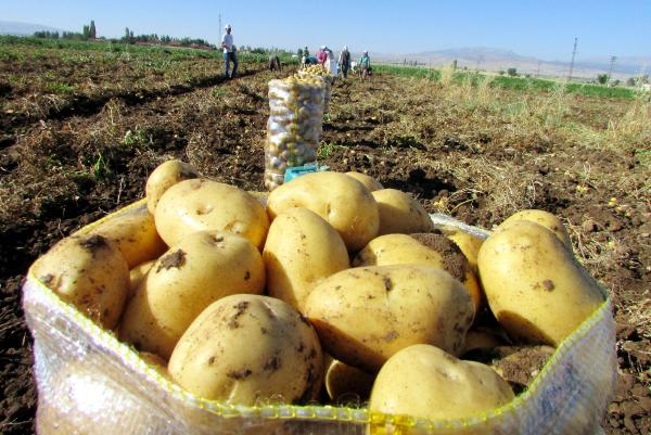 Patatese yüzde 100 zam