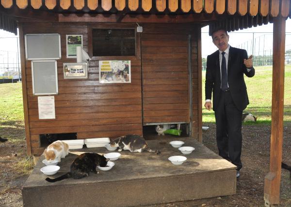 5 yıldızlı otelde kedilere özel ev