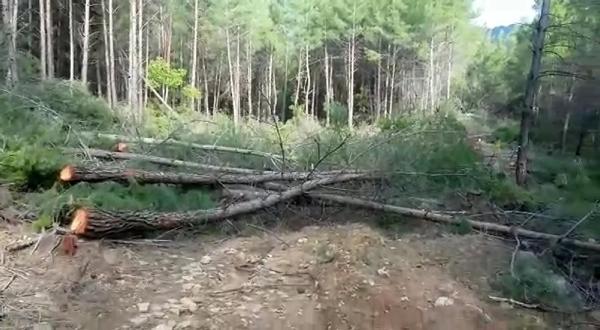 Manavgat'ta macera parkı için 300'den fazla ağaç kesildi