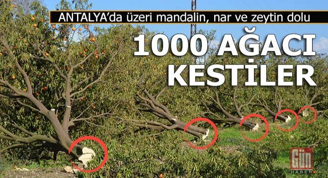 Antalya'da ağaç kestiren miras tartışması