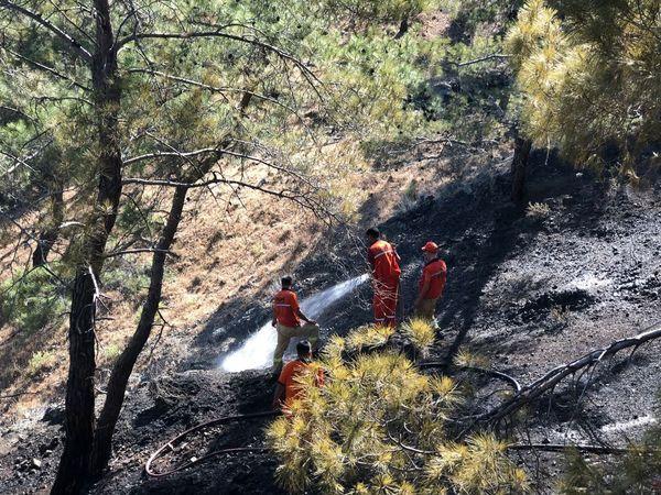 Kemer'de Orman Yangını Kontrol Altına Alındı!