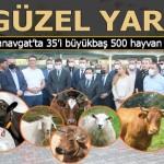 MHP'den Manavgat'ta 124 köylüye 500 hayvan